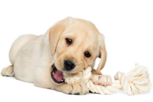 Teething Toys for Puppies