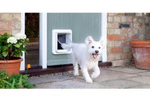 best-dog-doors