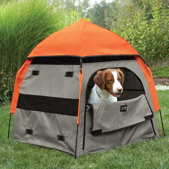 camping tents for camping with dogs